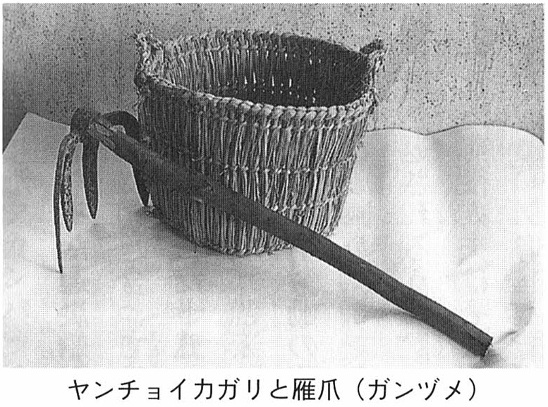 ヤンチョイカガリと雁爪(ガンツメ)